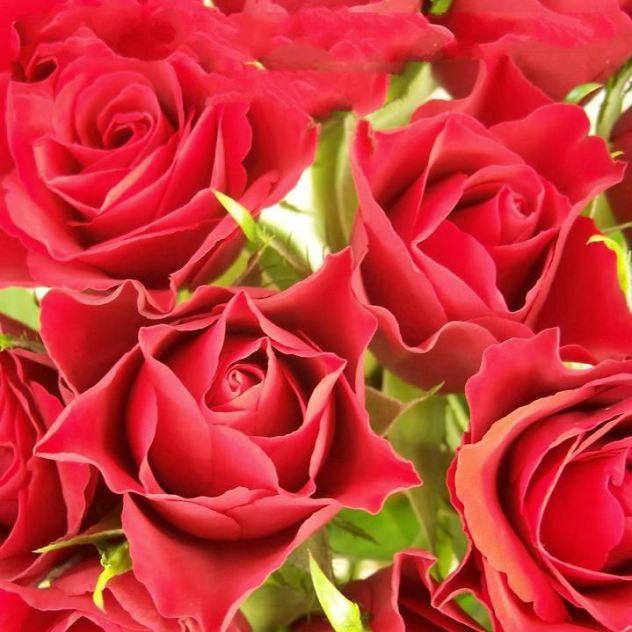 red-roses-95x95mm-v2
