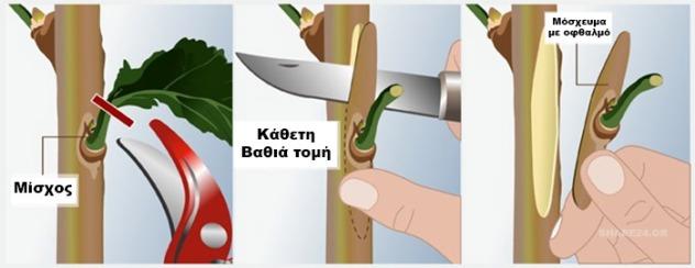 se-poia-dentra-kentronoume-kai-ti-pos-kai-pote-ginetai222